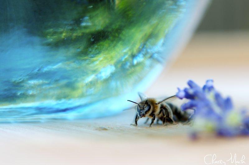 Global Bee