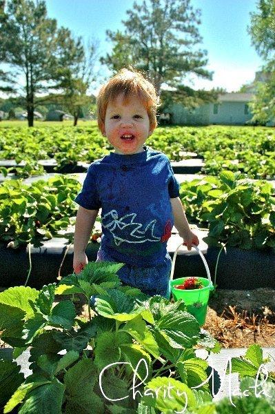 strawberry2011